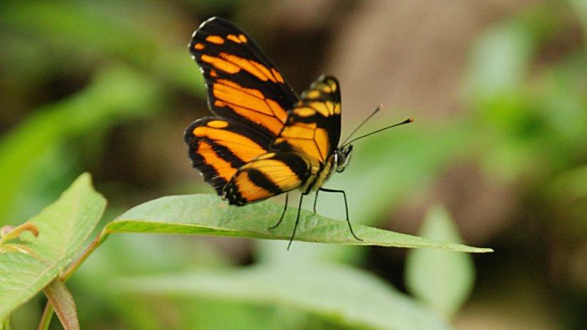 portada-mariposas-el-cielo-tamaulipas-a-rallas.jpg